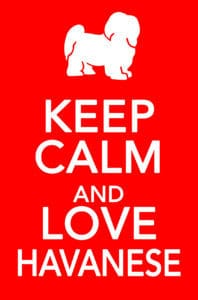 Keep calm and love havanese